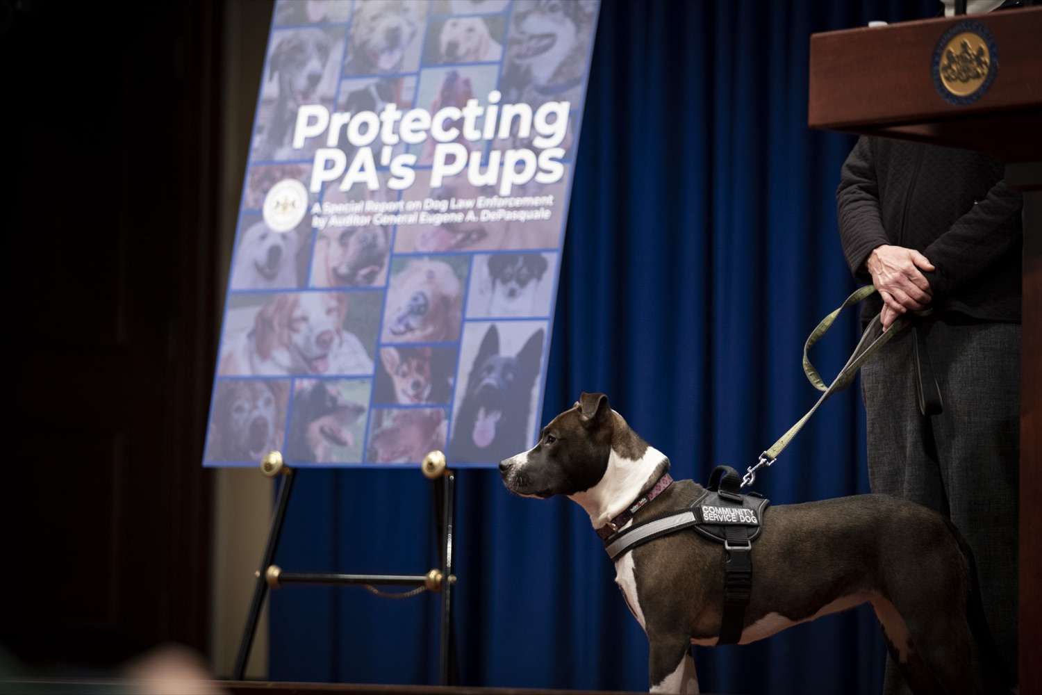 """<a href=""""https://filesource.wostreaming.net/commonwealthofpa/photo/17734_AUD_GEN_DOG_LICENSING_CZ_01.JPG"""" target=""""_blank"""">⇣Download Photo<br></a>Capitol Police community service dog Cappy, who was found abandoned as a puppy, serves as a reminder of why dog licensing is important in Pennsylvania, at the Harrisburg Capitol on February 6, 2020."""