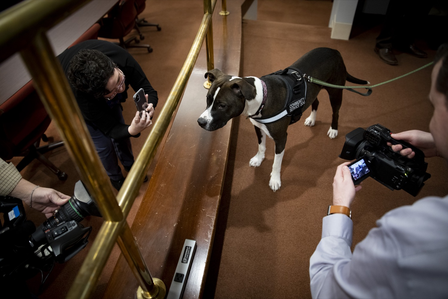 """<a href=""""https://filesource.wostreaming.net/commonwealthofpa/photo/17734_AUD_GEN_DOG_LICENSING_CZ_02.JPG"""" target=""""_blank"""">⇣Download Photo<br></a>Capitol Police community service dog Cappy enjoys attention from the media at the Harrisburg Capitol on February 6, 2020."""