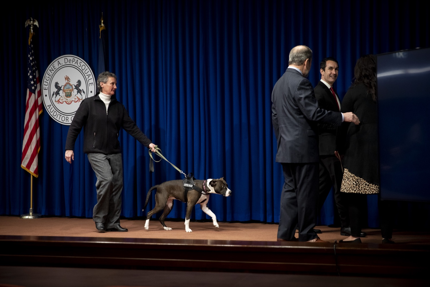 """<a href=""""https://filesource.wostreaming.net/commonwealthofpa/photo/17734_AUD_GEN_DOG_LICENSING_CZ_04.JPG"""" target=""""_blank"""">⇣Download Photo<br></a>Capitol Police community service dog Cappy exits the stage following a press conference on dog law enforcement funding, at the Harrisburg Capitol on February 6, 2020."""