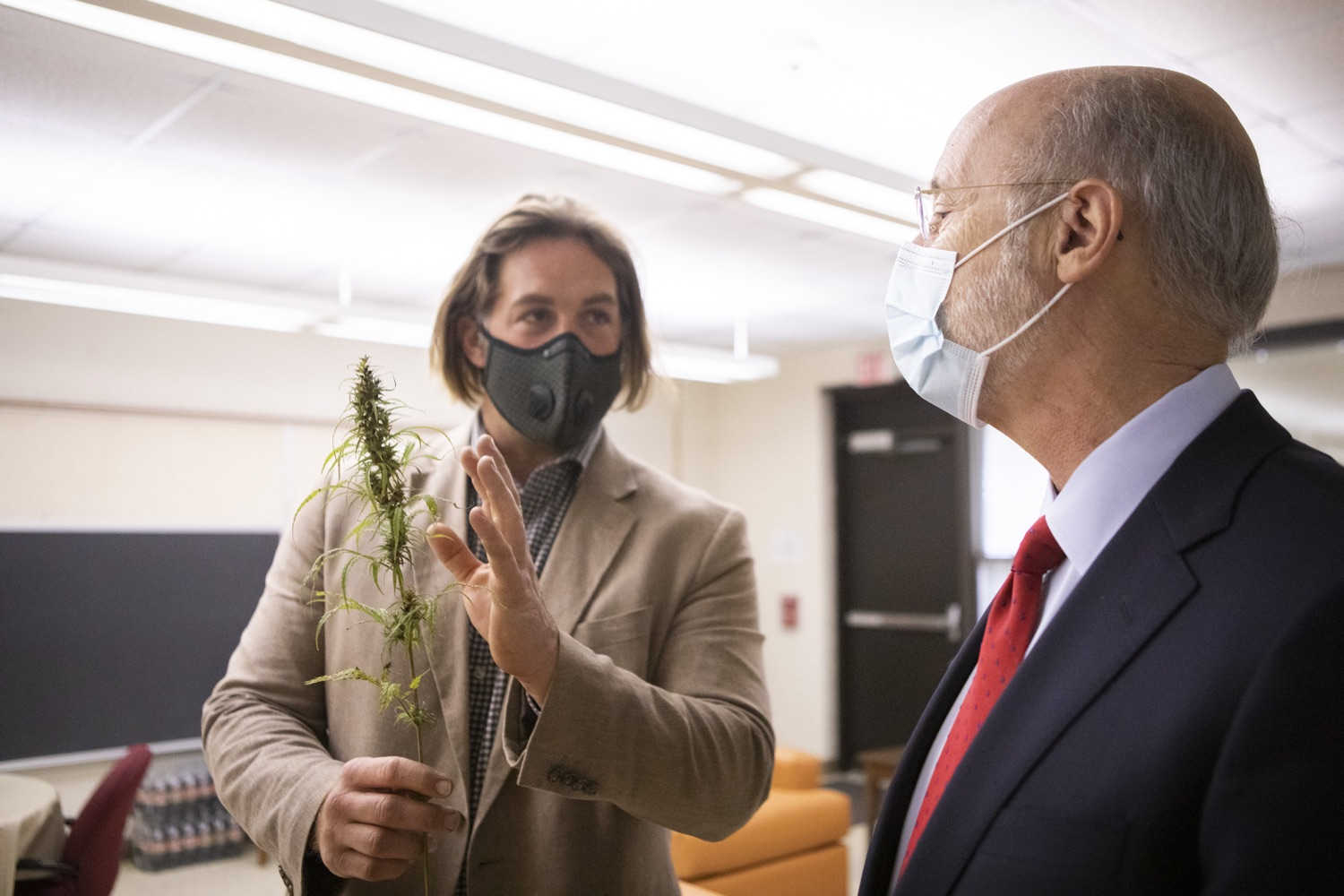 "<a href=""https://filesource.wostreaming.net/commonwealthofpa/photo/18310_gov_adult_use_cannabis_dz_003.jpg"" target=""_blank"">⇣ Download Photo<br></a>Eric Titus White, hemp farmer showing Governor Tom Wolf a cutting of industrial hemp.  Governor Tom Wolf visited The Mountain Center in Tobyhanna, Monroe County today to talk about the economic growth potential and restorative justice benefits of legalizing adult-use cannabis, something the state General Assembly has not yet done despite multiple requests from the governor and Lieutenant Governor John Fetterman to take up legislation this fall.  Tobyhanna, PA  October 13, 2020"