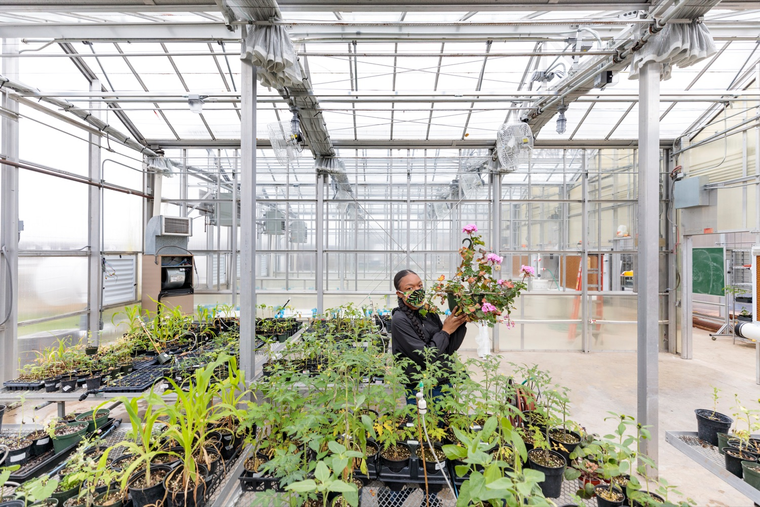 "<a href=""https://filesource.wostreaming.net/commonwealthofpa/photo/18324_AGRIC_Farm_Show_NK_003.jpg"" target=""_blank"">⇣ Download Photo<br></a>Delaware Valley University's Daijah Barrett 22, works with plants inside the university's Feldstein Horticulture Science Center research greenhouses in Doylestown on Thursday, November 12, 2020."