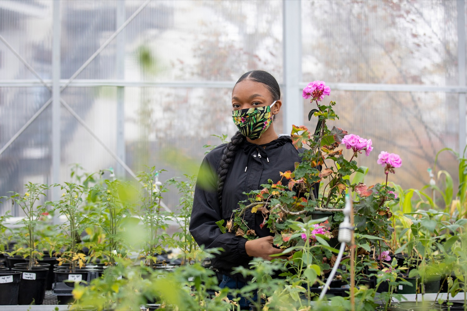 "<a href=""https://filesource.wostreaming.net/commonwealthofpa/photo/18324_AGRIC_Farm_Show_NK_012.jpg"" target=""_blank"">⇣ Download Photo<br></a>Delaware Valley University's Daijah Barrett 22, works with plants inside the university's Feldstein Horticulture Science Center research greenhouses in Doylestown on Thursday, November 12, 2020."