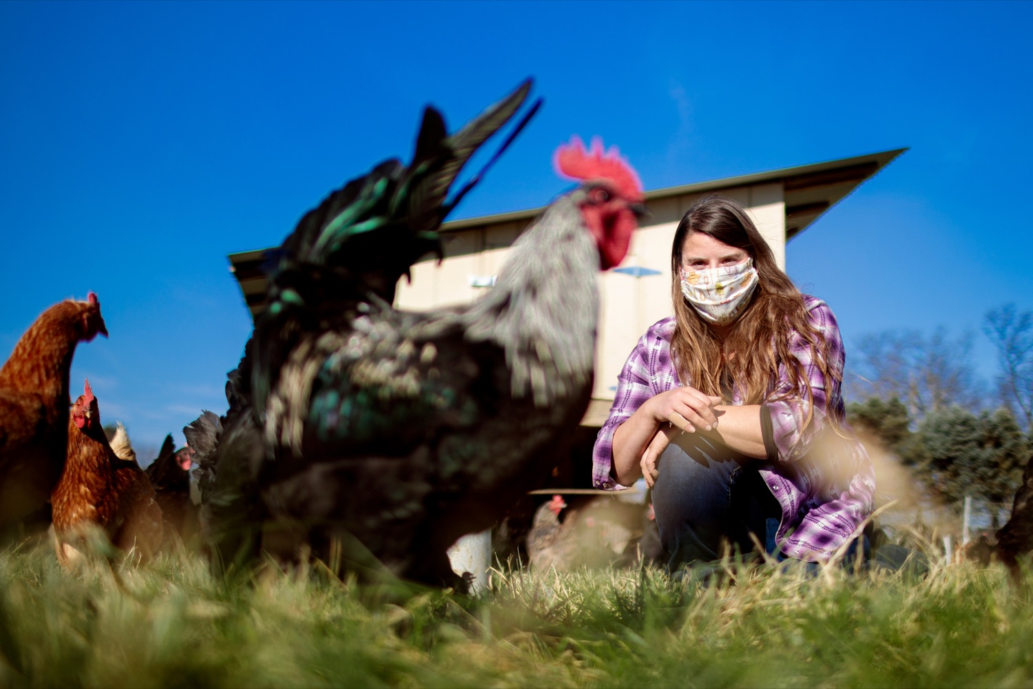 "<a href=""https://filesource.wostreaming.net/commonwealthofpa/photo/18325_AGRIC_Farm_Show_NK_003.jpg"" target=""_blank"">⇣ Download Photo<br></a>Liz Wagner, owner-operator of Crooked Row Farm, feeds the chickens at the farm in Orefield on Friday, November 20, 2020."