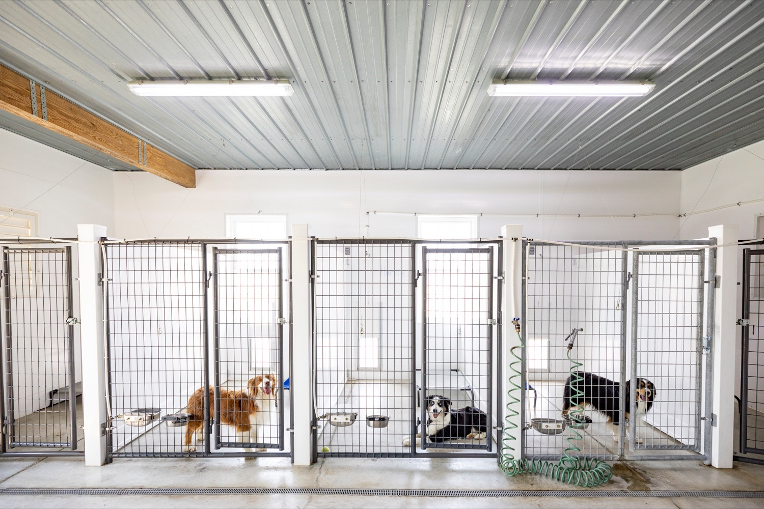 "<a href=""https://filesource.wostreaming.net/commonwealthofpa/photo/18648_AGRIC_Dog_Law_NK_005.jpg"" target=""_blank"">⇣ Download Photo<br></a>The interior of Creekside Aussies, a compliant non-commercial breeding kennel, is pictured in Annville on Thursday, April 8, 2021."