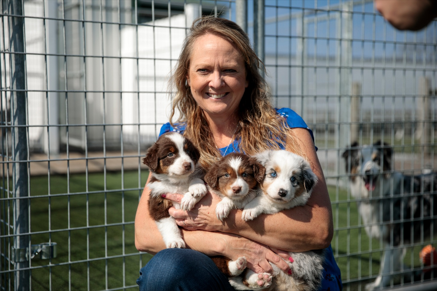 "<a href=""https://filesource.wostreaming.net/commonwealthofpa/photo/18648_AGRIC_Dog_Law_NK_009.jpg"" target=""_blank"">⇣ Download Photo<br></a>Sarah Martin, owner of Creekside Aussies, holds six-week-old Australian shepherd puppies, at her home in Annville on Thursday, April 8, 2021."
