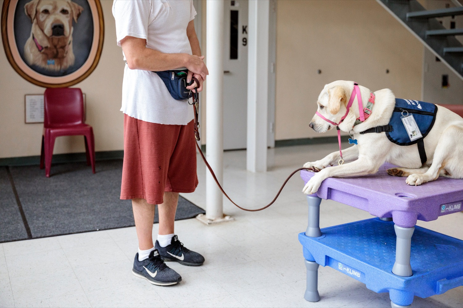 """<a href=""""https://filesource.wostreaming.net/commonwealthofpa/photo/18779_DOC_PostCovid_NK_011.jpg"""" target=""""_blank"""">⇣Download Photo<br></a>Inmates work with service dogs as part of """"Canine Partners for Life"""" during a media tour, where staff and inmates discussed life in a congregate setting during the pandemic, how the DOC responded to COVID-19, and next steps for the department as restrictions loosen and in-person visitation is safely re-introduced throughout the state prison system, on Wednesday, June 2, 2021."""
