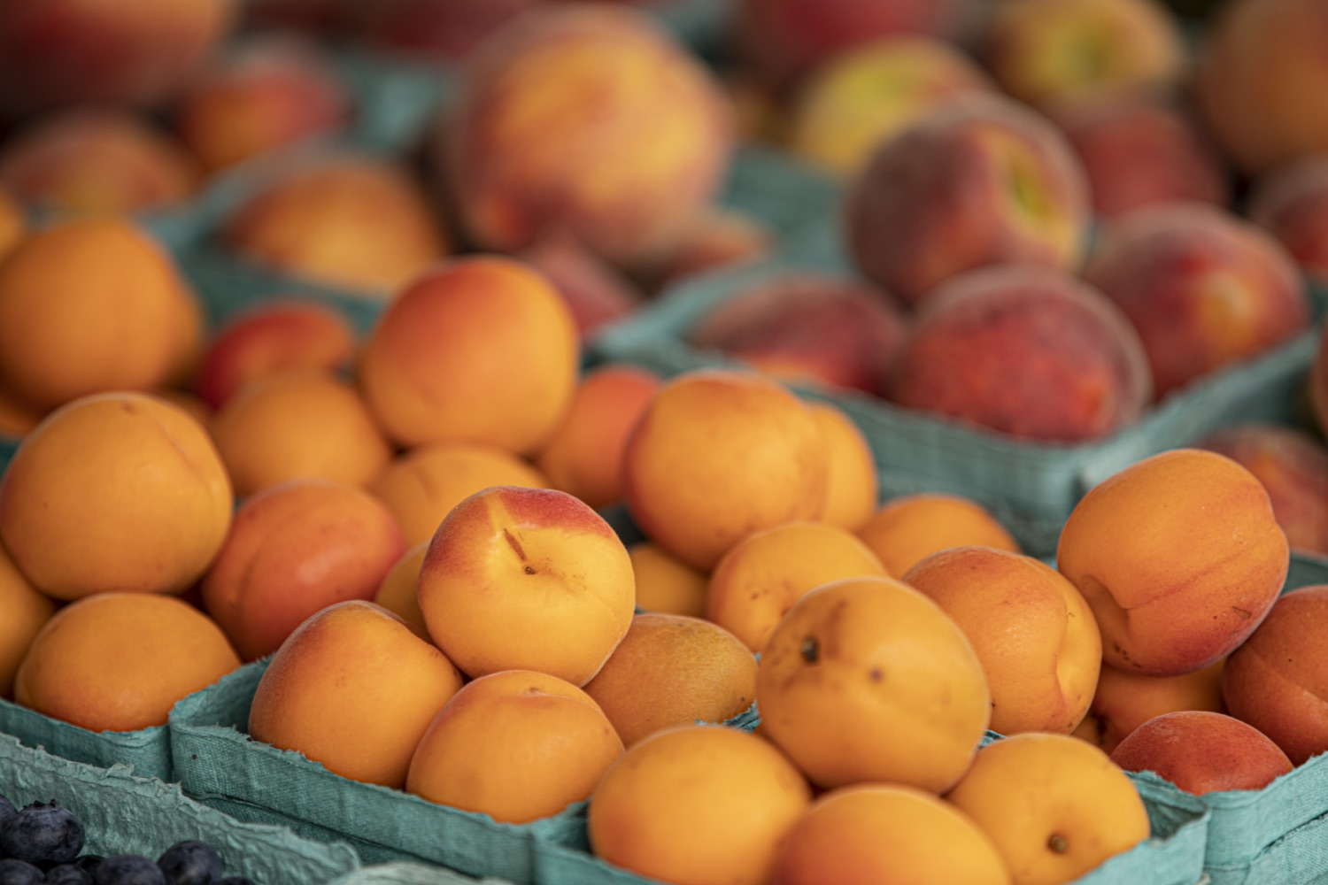 """<a href=""""https://filesource.wostreaming.net/commonwealthofpa/photo/18790_Agr_Farm_Market_15.jpg"""" target=""""_blank"""">⇣Download Photo<br></a>At the Open-Air Farmers Market at the Farm Show Complex in Harrisburg today, Wolf Administration officials reminded Pennsylvanias low-income seniors and WIC recipients to obtain and use their vouchers from the Pennsylvania Farmers Market Nutrition Program (FMNP) to purchase fresh, local fruits, vegetables, and herbs from FMNP-approved farmers at farmers markets and farm stands across the commonwealth."""