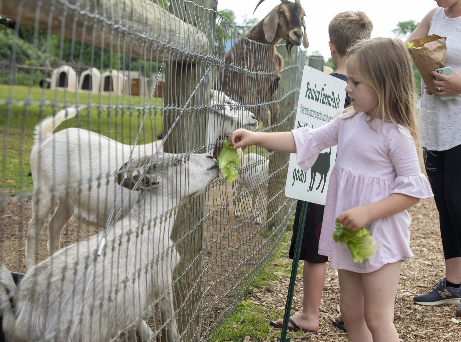 """<a href=""""https://filesource.wostreaming.net/commonwealthofpa/photo/18791_agric_AGcareer_00004.jpg"""" target=""""_blank"""">⇣Download Photo<br></a>Wolf Administration to Families: Kids are the Future of Pennsylvania Agriculture, Explore Hands-On Ag Opportunities this Summer"""