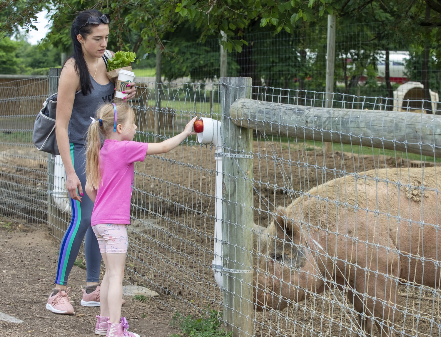 """<a href=""""https://filesource.wostreaming.net/commonwealthofpa/photo/18791_agric_AGcareer_00005.jpg"""" target=""""_blank"""">⇣Download Photo<br></a>Wolf Administration to Families: Kids are the Future of Pennsylvania Agriculture, Explore Hands-On Ag Opportunities this Summer"""