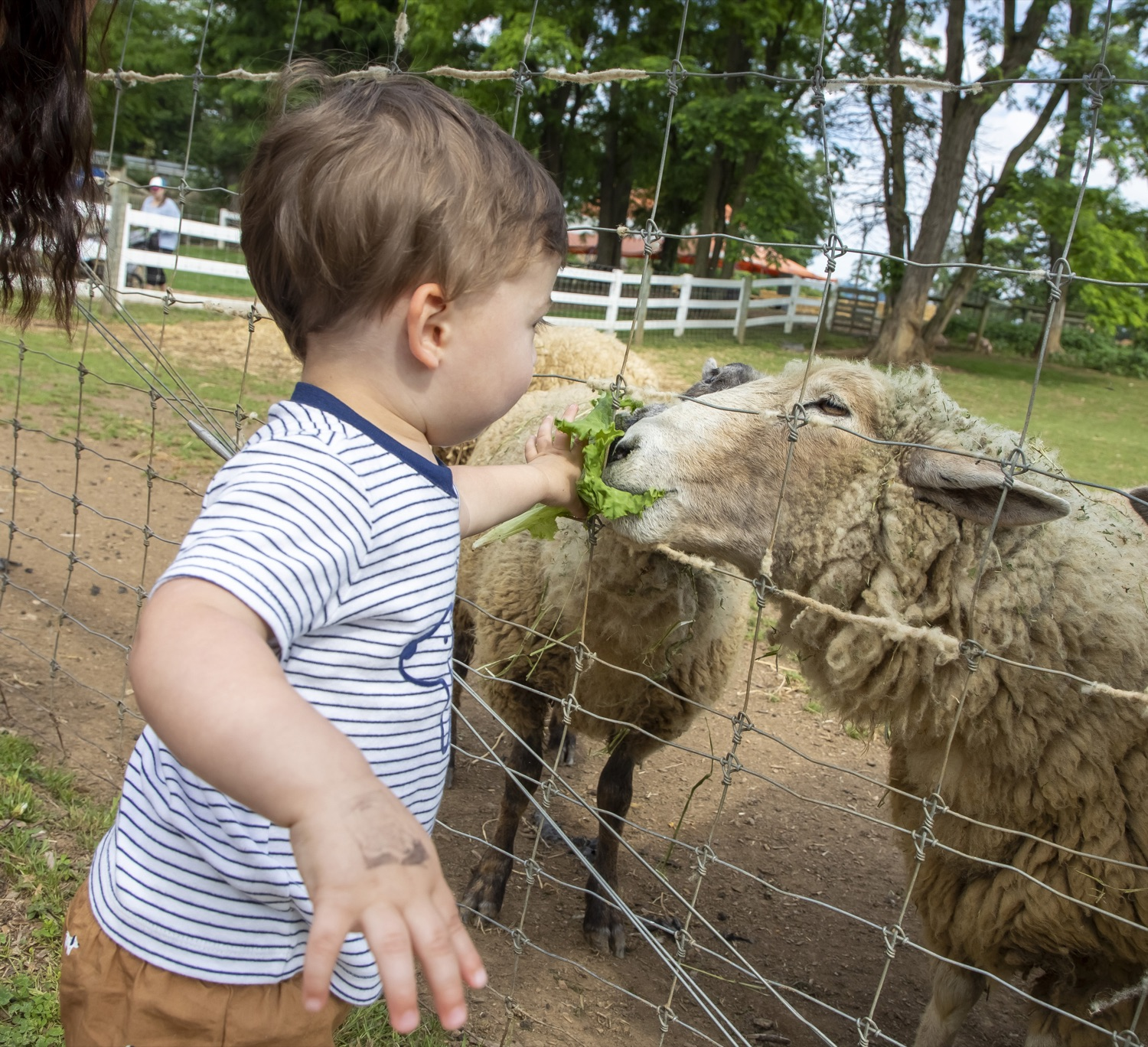 """<a href=""""https://filesource.wostreaming.net/commonwealthofpa/photo/18791_agric_AGcareer_00021.jpg"""" target=""""_blank"""">⇣Download Photo<br></a>Wolf Administration to Families: Kids are the Future of Pennsylvania Agriculture, Explore Hands-On Ag Opportunities this Summer"""