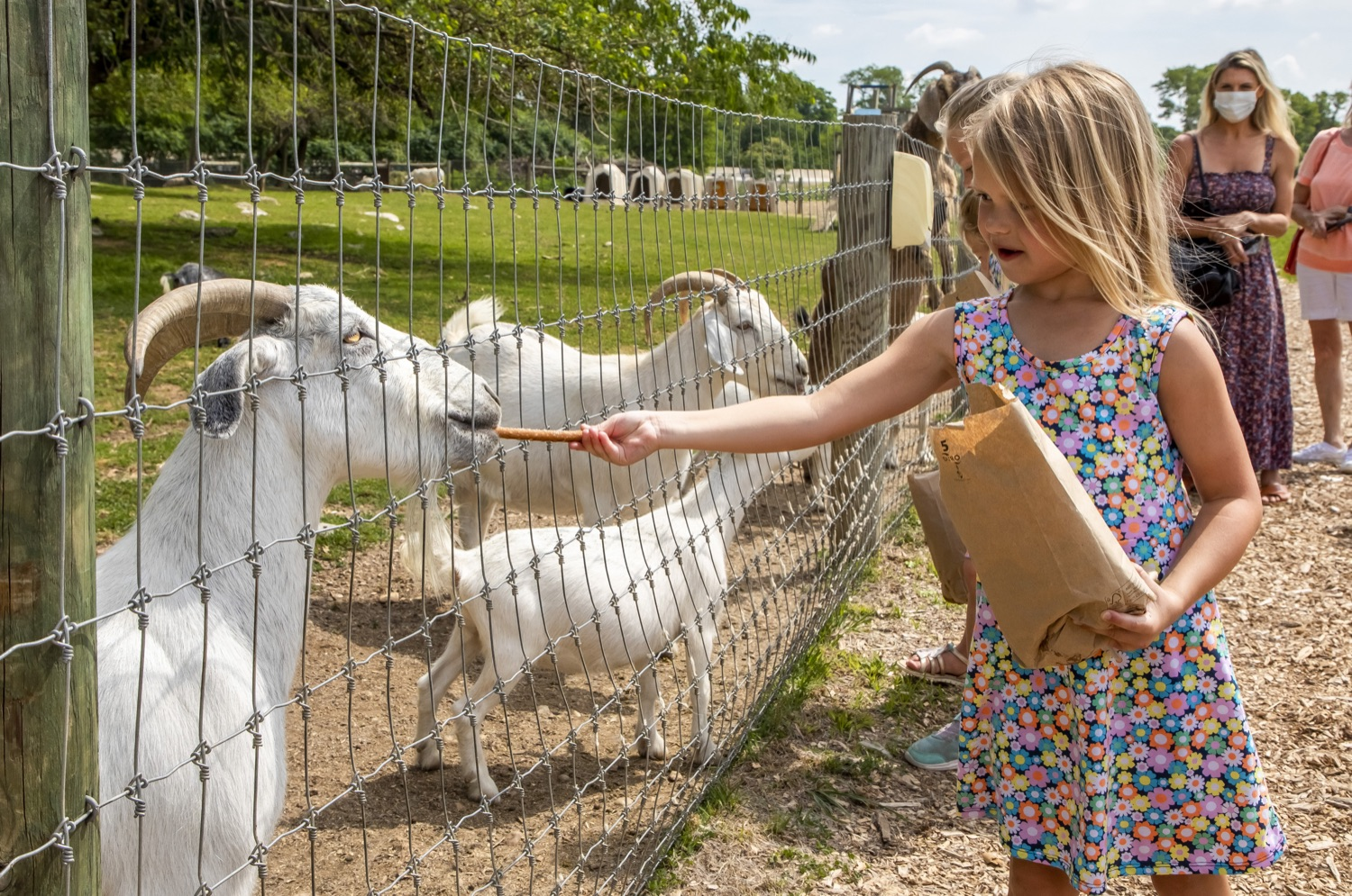 """<a href=""""https://filesource.wostreaming.net/commonwealthofpa/photo/18791_agric_AGcareer_00031.jpg"""" target=""""_blank"""">⇣Download Photo<br></a>Wolf Administration to Families: Kids are the Future of Pennsylvania Agriculture, Explore Hands-On Ag Opportunities this Summer"""